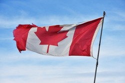 An image of an old tattered Canadian flag waving against a blue sky.
