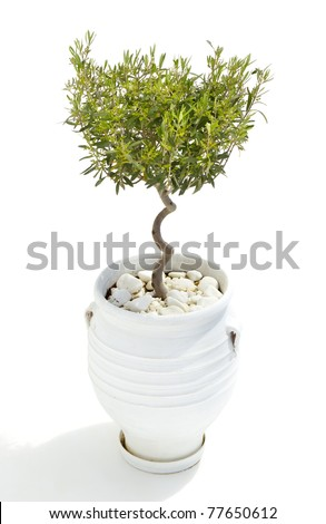 An image of an olive tree on white background