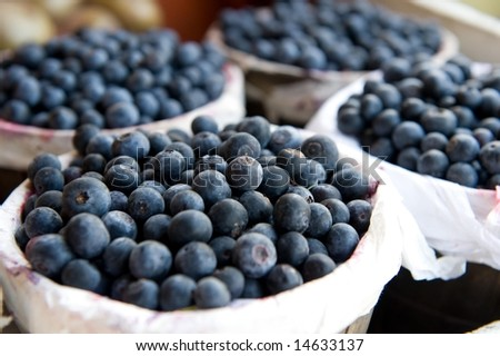 An image of bushels full of freshly picked blueberries