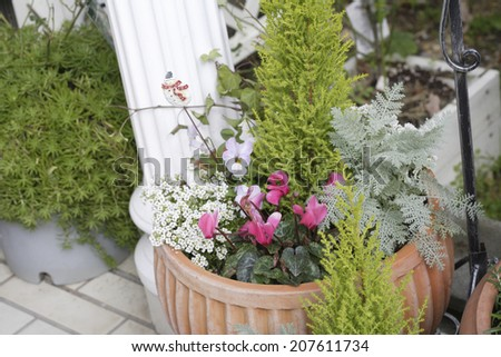 An image of Container Garden