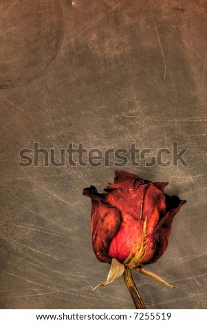 An image of dried rose