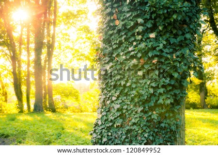 An image of Forest in the morning with sunrays