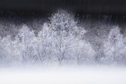 An Image of Frozen Tree