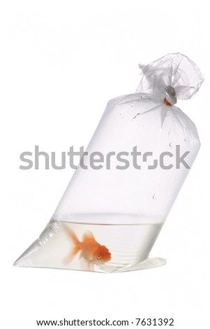 An image of goldfish in plastic package