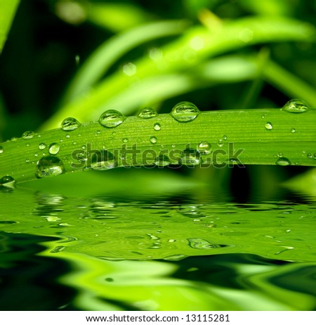 An image of grass with rain drops