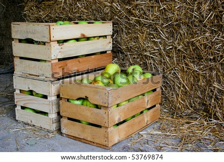An image of green apples in boxes