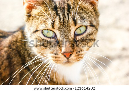 An image of homeless cat