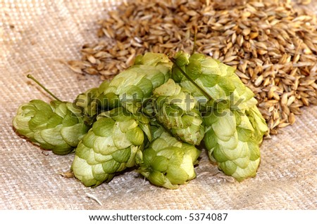 An image of hop and corn of sty