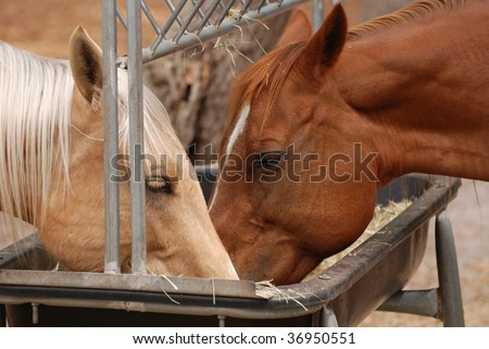 An image of horses feeding at the trough