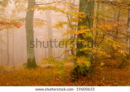An image of mist in autumn forest. Autumn theme.
