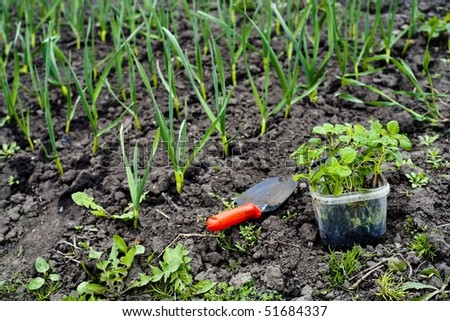 An image of plants in the ground and shovel