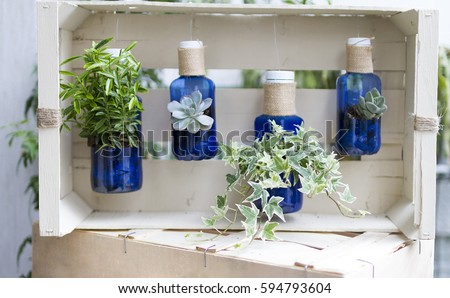 An image of plants inside recycled bottles