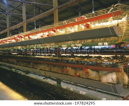 An Image of Poultry Farm