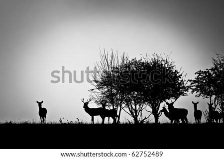 An image of some deer in the morning mist #62752489