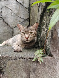 An image of stray cat