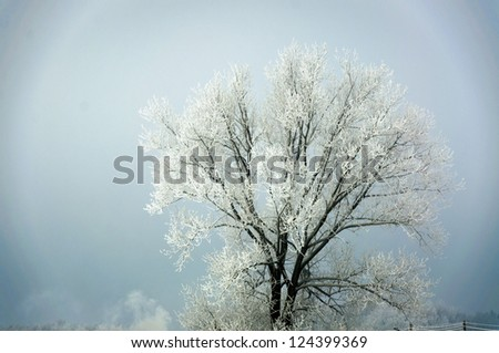 An image of tree covered by snow in winter