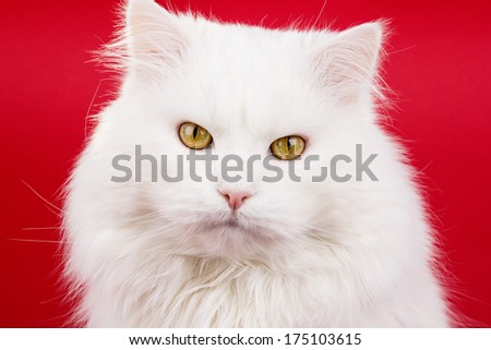 an image of white cat on the white background