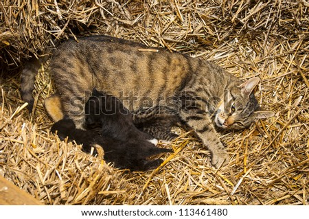 An image of young cats in the barn lying on the straw