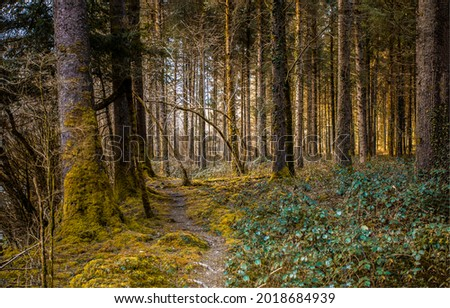 An inconspicuous path in forest. Deep forest path. Path in deep forest. Forest path view