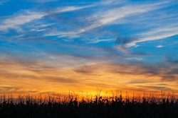 An Indiana cornfield is silhouetted by a colorful sunset sky.