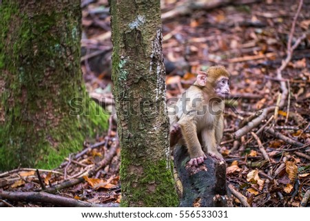 An infant monkey sitting on a stone next to a tree #556533031