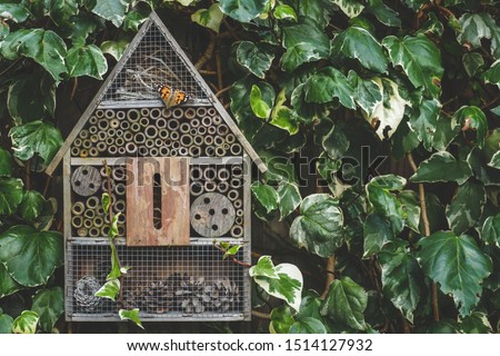 Photo of  An insect / bug hotel hung on an ivy covered wall in an English country garden. A painted lady butterfly is resting on the wooden front.
