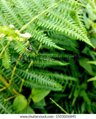 An insect photographed in the mountains of northern Vietnam stayed on the leaves of plants. #1503006845