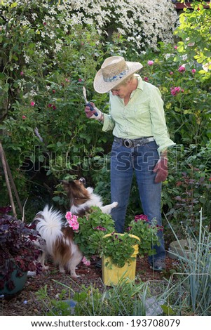 An insistent Pomeranian dog tries to get the attention of her ninety year-old companion as she works her garden.