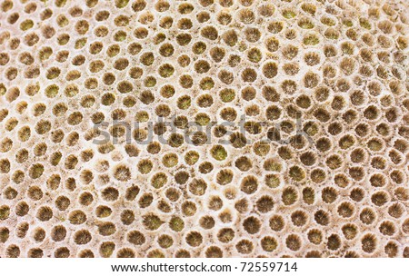 An interesting texture from a closeup of coral rock