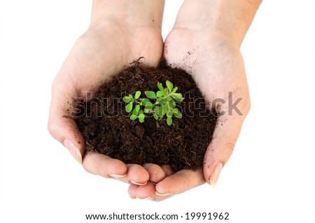 An isolated photo of a plant/weed in soil in a hand
