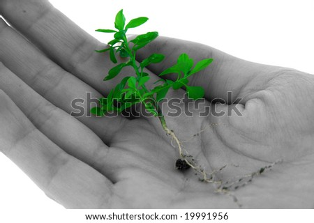 An isolated photo of a plant/weed in the palm of a hand