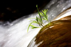 An isolated plant in the middle edge of a small natural waterfall stream in Borneo rainforest