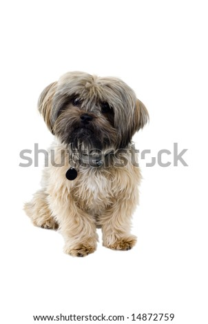 An isolated puppy on a white background.