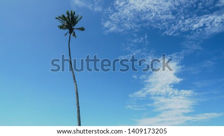 An isolated tall palm tree in Western Samoa