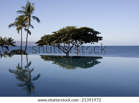 An oceanside infinity pool reflects nearby trees.