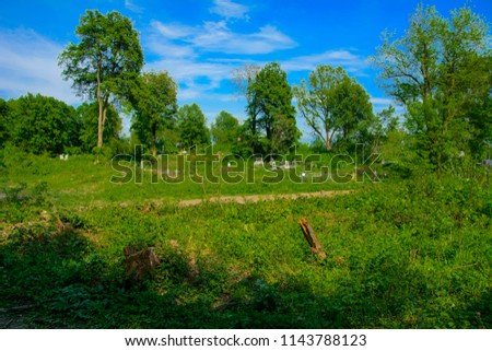 An old abandoned cemetery, crosses and graves overgrown with tall grass against the backdrop of tall trees and a blue sky. #1143788123