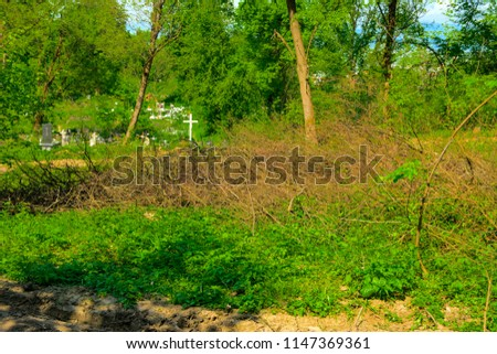 An old abandoned cemetery, crosses and graves overgrown with tall grass against the backdrop of tall trees and a blue sky. #1147369361
