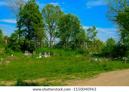 An old abandoned cemetery, crosses and graves overgrown with tall grass against the backdrop of tall trees and a blue sky. #1150040963