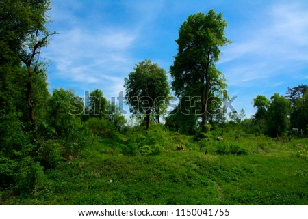 An old abandoned cemetery, crosses and graves overgrown with tall grass against the backdrop of tall trees and a blue sky. #1150041755