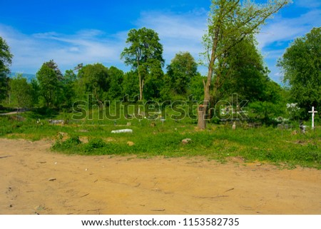 An old abandoned cemetery, crosses and graves overgrown with tall grass against the backdrop of tall trees and a blue sky. #1153582735