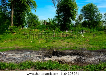 An old abandoned cemetery, crosses and graves overgrown with tall grass against the backdrop of tall trees and a blue sky. #1164303991