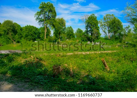 An old abandoned cemetery, crosses and graves overgrown with tall grass against the backdrop of tall trees and a blue sky. #1169660737