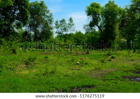 An old abandoned cemetery, crosses and graves overgrown with tall grass against the backdrop of tall trees and a blue sky. #1176275119