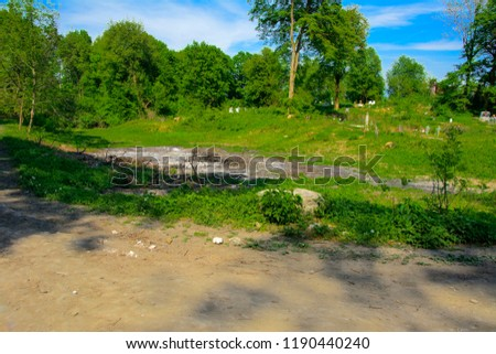 An old abandoned cemetery, crosses and graves overgrown with tall grass against the backdrop of tall trees and a blue sky. #1190440240