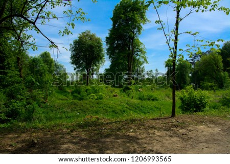 An old abandoned cemetery, crosses and graves overgrown with tall grass against the backdrop of tall trees and a blue sky. #1206993565