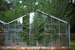 an old abandoned greenhouse with the remnants of glazing and trees sprouted inside