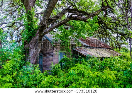 An Old Abandoned Shack Hidden Away in the Trees and Overgrown Brush and Weeds
