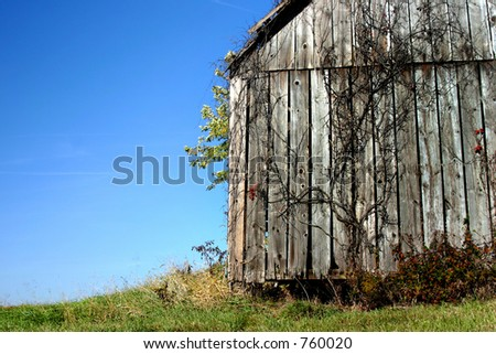 An old barn with a dead vine