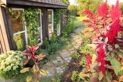 An old broken path made of pavers and bricks winds through colorful flowers of a country cottage garden, next to a small greenhouse shed.