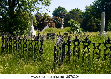 An old cemetary with high grass covering the tombs.